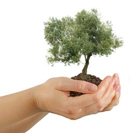 Oil_tree